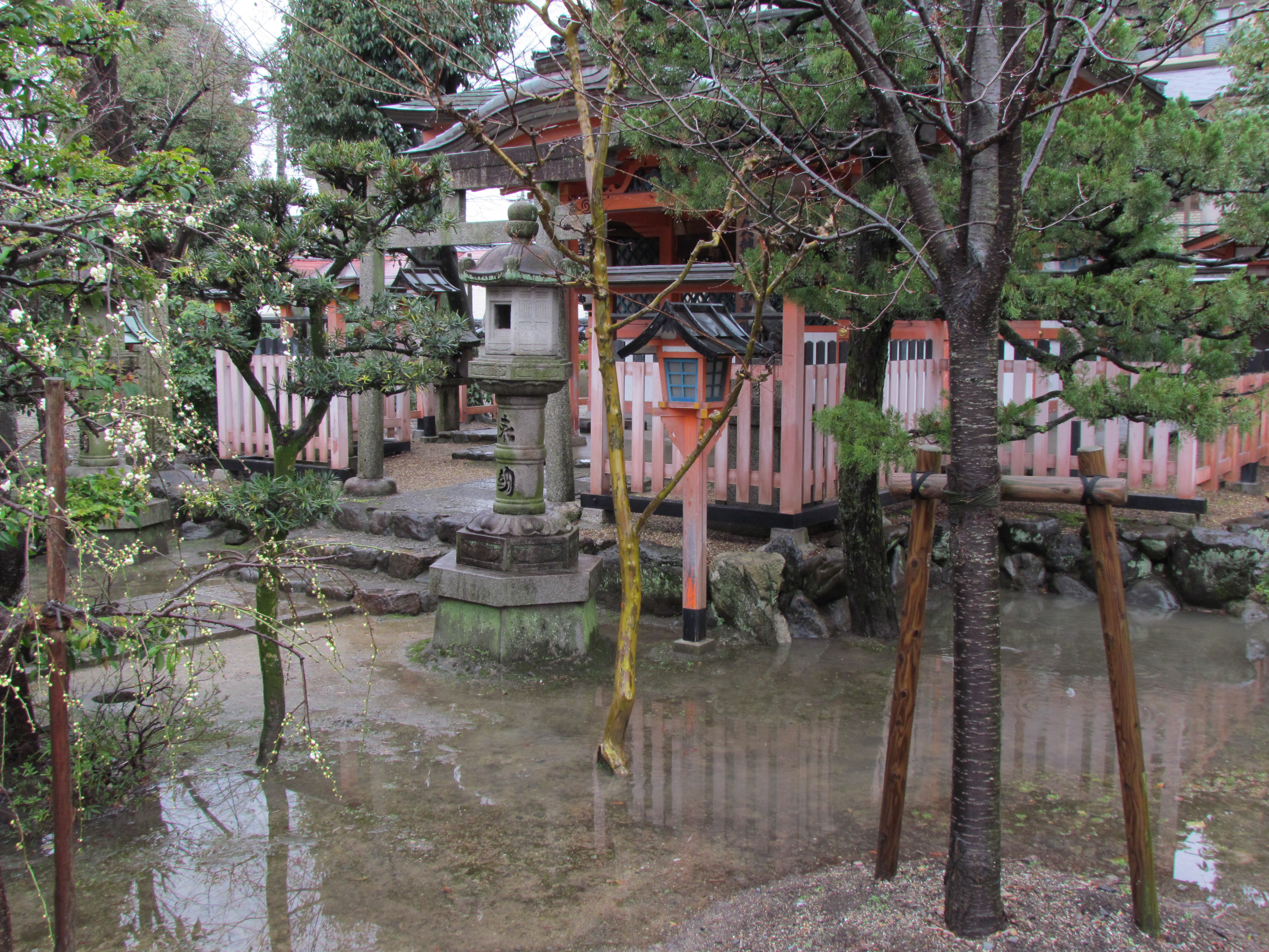 flooded garden