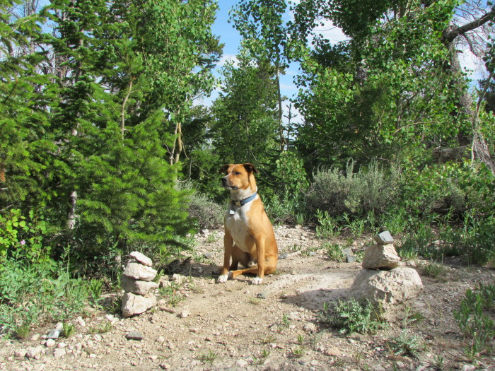 Grady guarding the path that leads to Zorro Wall, and in turn Gaucho