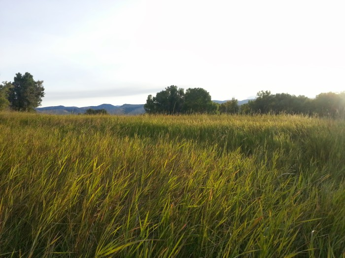 Lander field